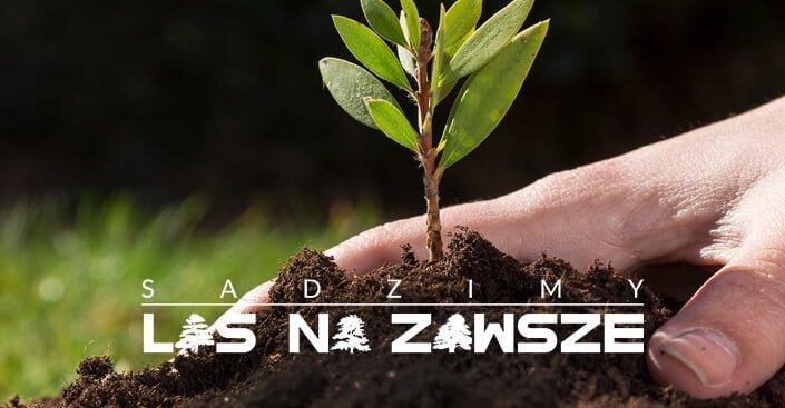 Tarasy Kompozytowe, Taras Z Desek Kompozytowych - Lenta zdjęcie nr 4